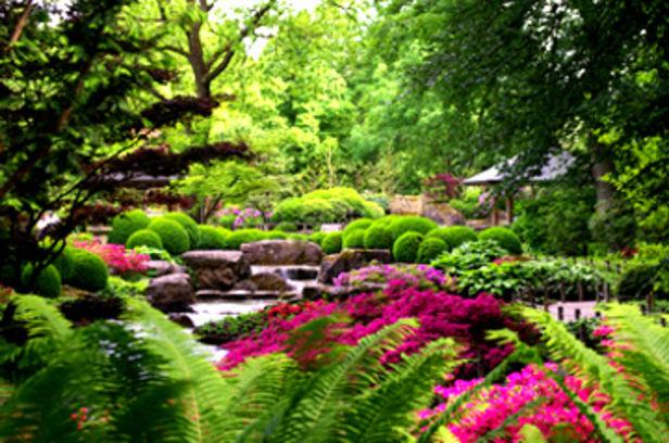 Botanischer garten - Japangarten pflanzen ...